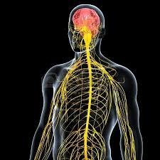 problematiche neurologiche